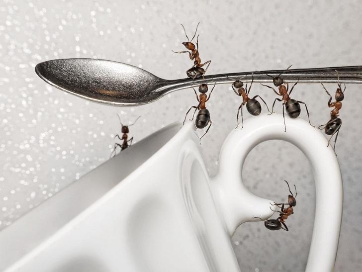 Директора школы в Калужской области оштрафовали за муравьев в сахаре