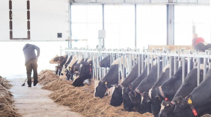 Роботизированная ферма за70млнруб. открылась вКалужской области